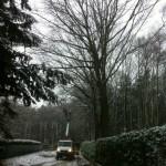 Snoeien van bomen, boomverzorging Buyens