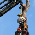 Vellen van bomen, boomverzorging Buyens