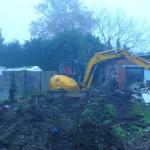 Frezen & uitgraven van wortels, boomverzorging Buyens