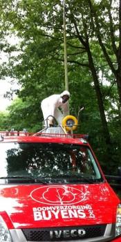 Bestrijden van processierupsen, boomverzorging Buyens