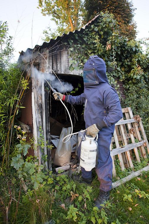 wespennesten verdelgen, boomverzorging Buyens